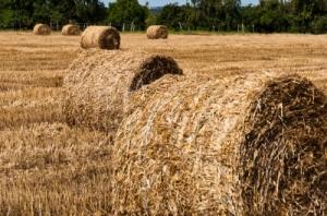 "Image Hay Bales On Freshly Harvested Fields"" Courtesy of Franky242/ freedigitalphotos.net"