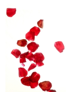 Red Rose Petals by Victor Habbick, courtesy freedigitalphotos.net