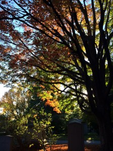 Fall trees in Mount Auburn Cemetery