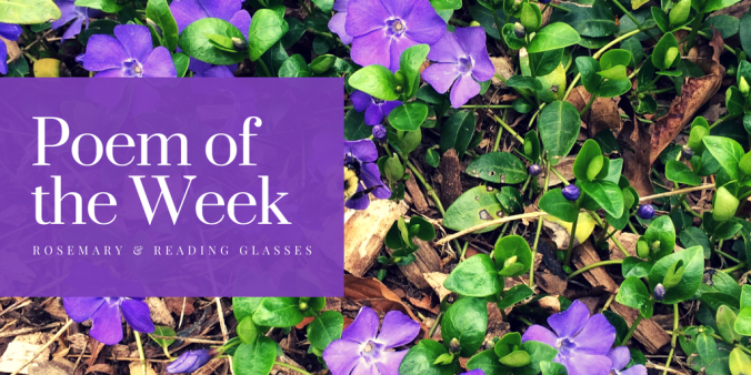 Whereof the Gift Is Small---poetry, Maxine Kumin, poem of the week, poetry discussion, flowers, nature